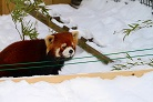 asahiyama_zoo_winter3